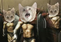 Warrior_kitties_4