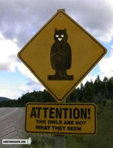 Owls_are_not_what_they_seem_2
